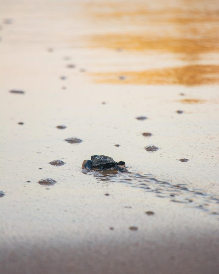 Turtles are Back Home